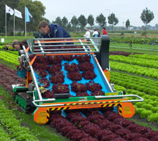 Harvesting baby leaf salads during Dutch variety trials