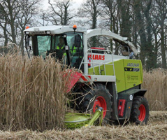 Forage harvester cutting miscanthus for renewable energy