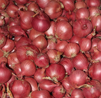 Horticultural variety trials: red onions
