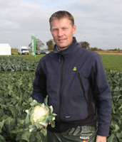 Cauliflower breeder in Dutch horticulture trials