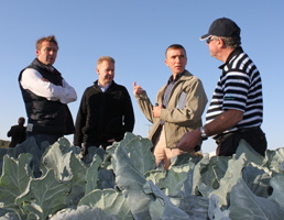 UK growers and breeders discuss broccoli in Spain