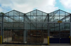 Modern glasshouse facility in Lincolnshire