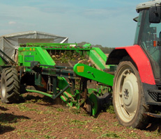 Reporting on new cleaning technology while potato harvesting in North Lincolnshire