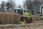 Harvesting miscanthus for biomass