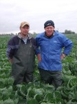 Brassica grower and breeder